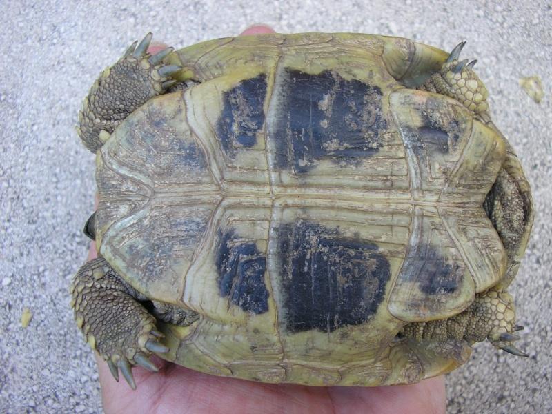 Identification des mes tortues 1410