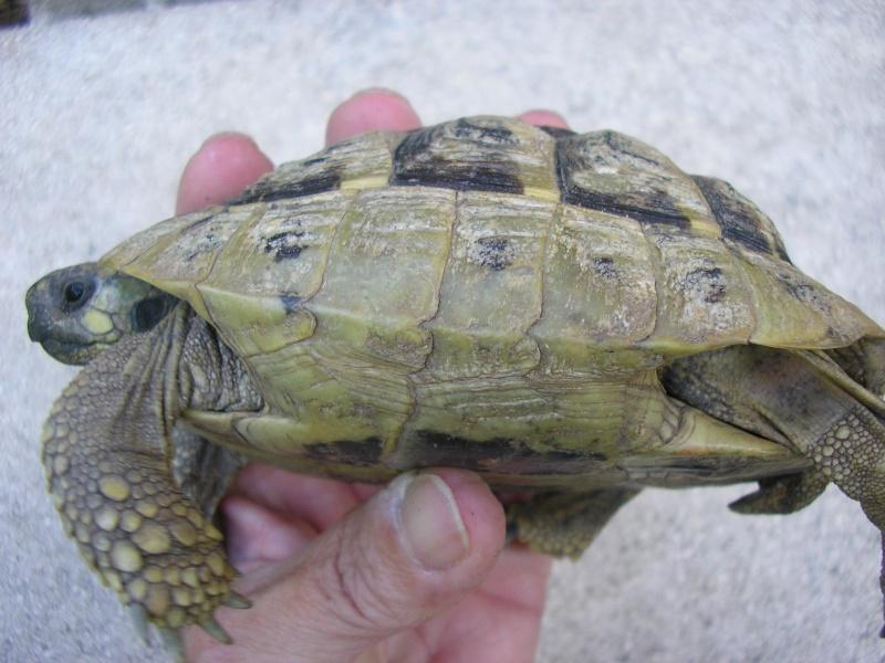 Identification des mes tortues 1510