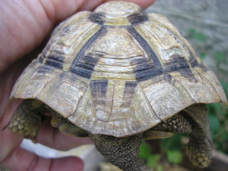 Identification des mes tortues 1710