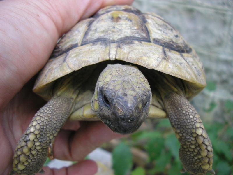 Identification des mes tortues 1810