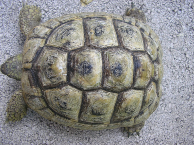 Identification des mes tortues 710
