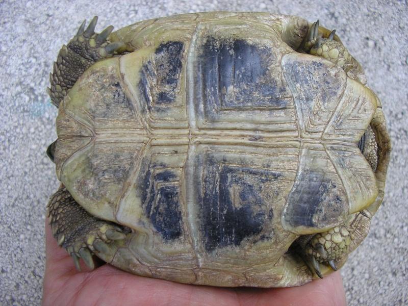 Identification des mes tortues 810