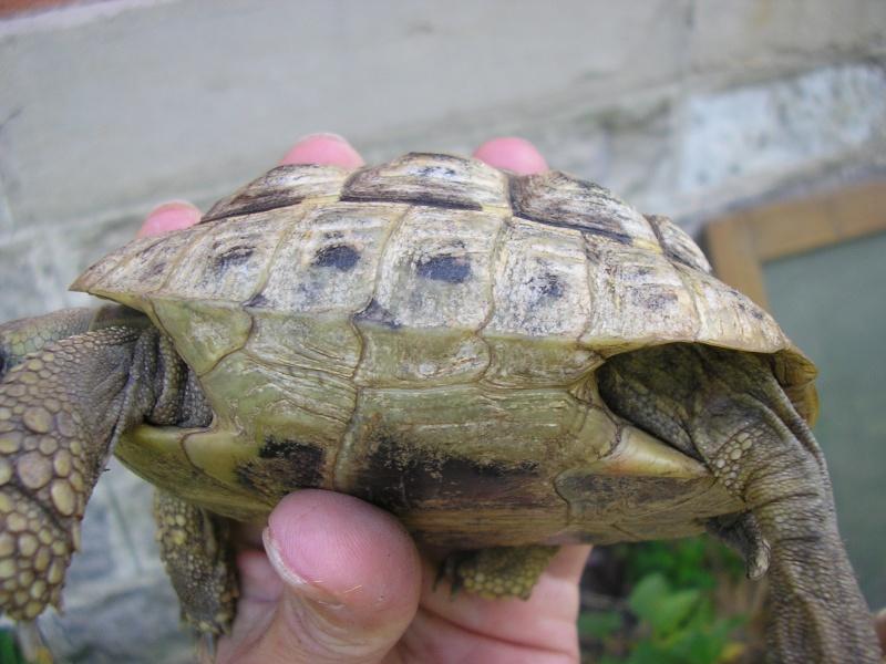 Identification des mes tortues 910