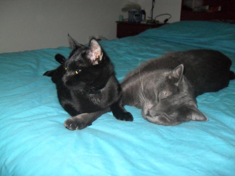 mes deux chats Sdc12310