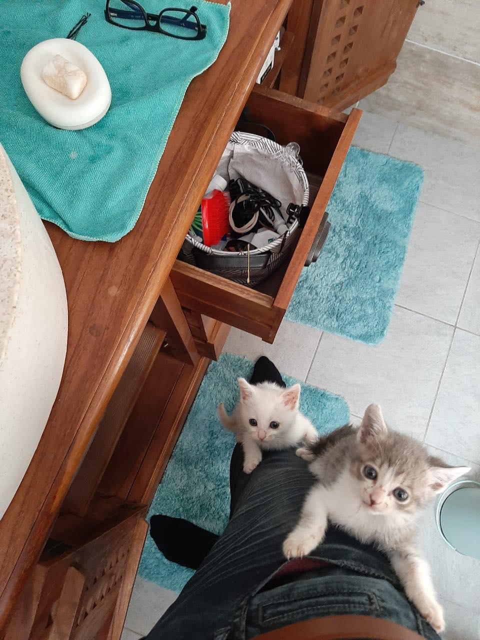 CYRION, LATTE (Mozza) et FUWA (Luigi) 10056711