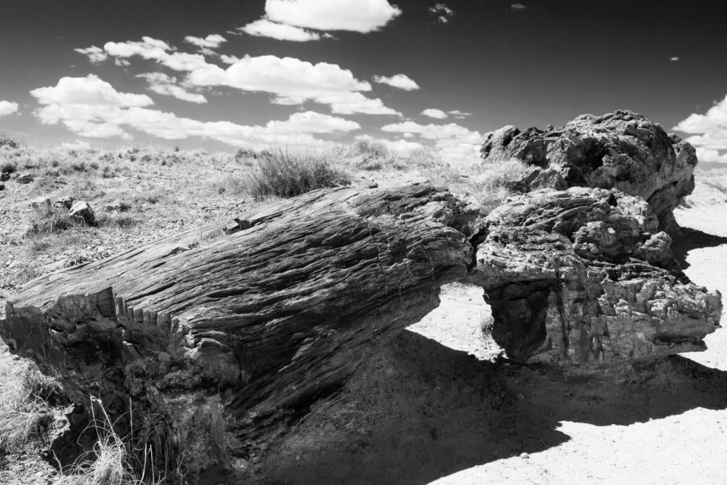Arizona Avril 2019 _dsc1910