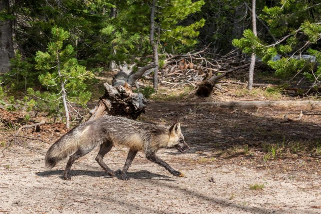 Wyoming, état des Cowboys _dsc5717
