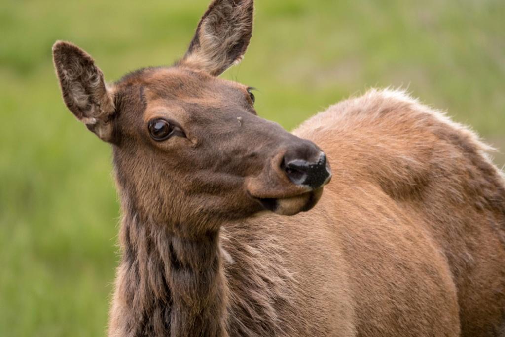Wyoming, état des Cowboys _dsc6220