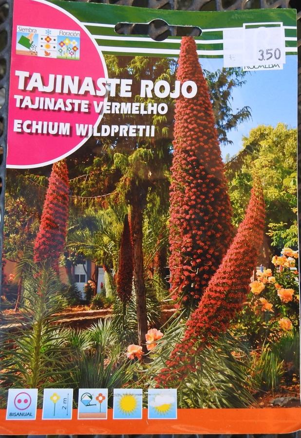 Echium wildpretii - Seite 14 Echium10