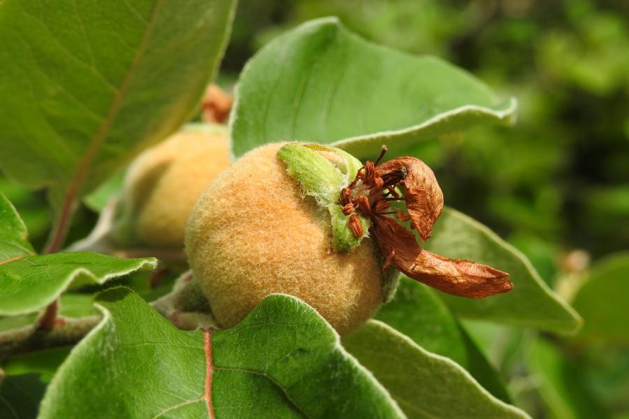 Was für Obstsorten habt Ihr denn im Garten? Aussaat, Spalier, Beerensträucher, Erfahrung und Hilfe :) - Seite 15 Obst10