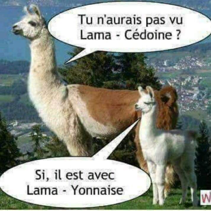 Humour en image du Forum Passion-Harley  ... - Page 38 Img-2021