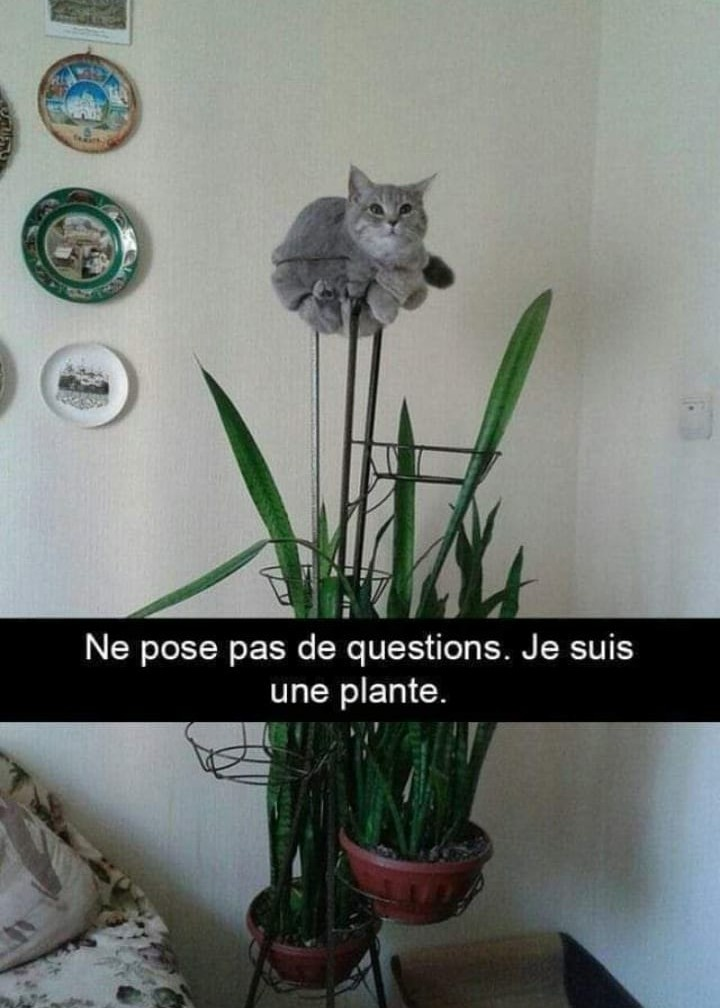 Humour en image du Forum Passion-Harley  ... - Page 5 Img_2574