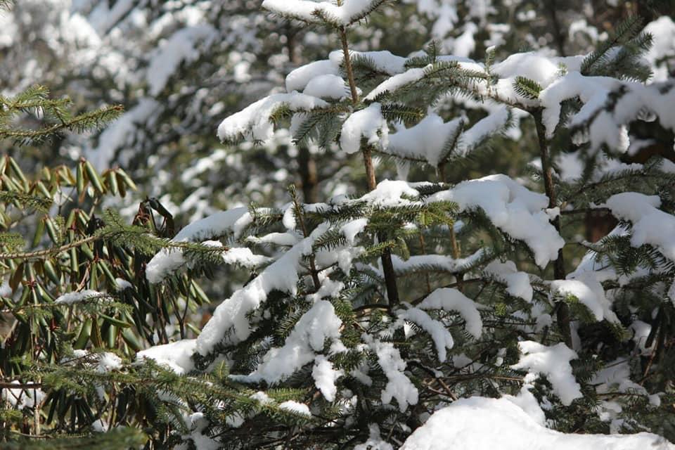 ইয়ুমথাং  সিকিম Yumthang Valley 38041810