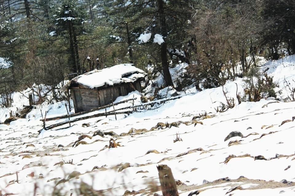 ইয়ুমথাং  সিকিম Yumthang Valley 38205910