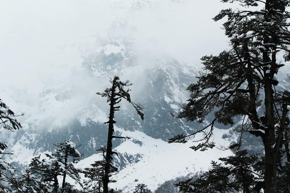 ইয়ুমথাং  সিকিম Yumthang Valley 38245310