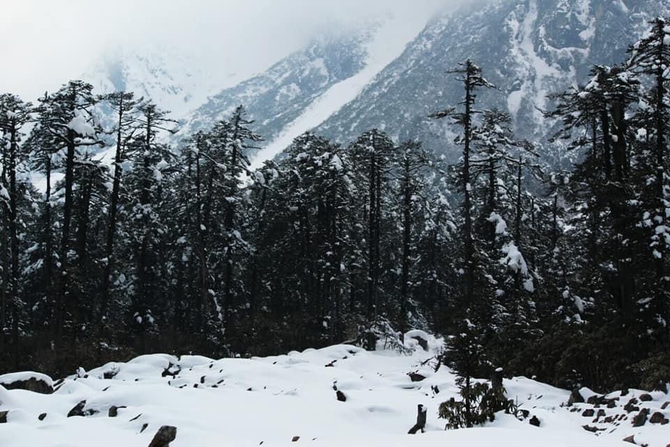 ইয়ুমথাং  সিকিম Yumthang Valley 38424510