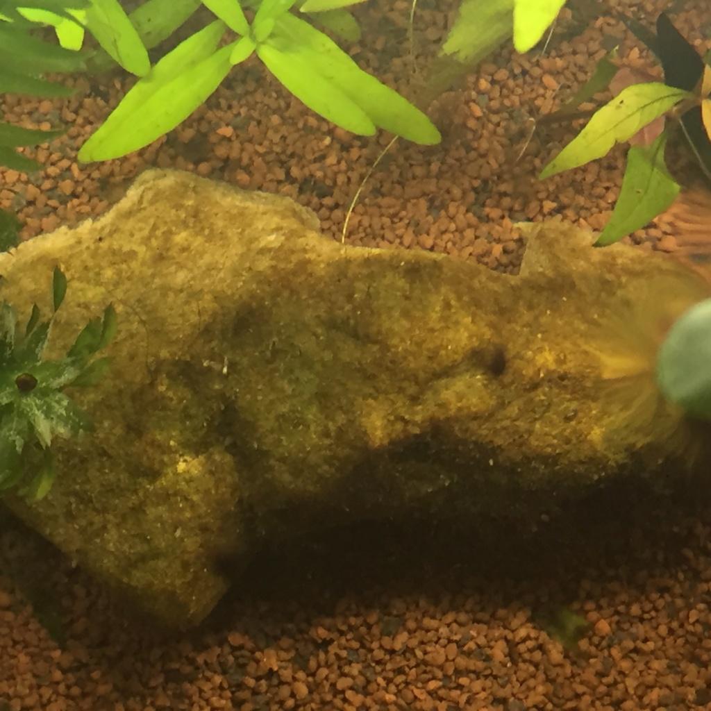 Lancement d'un nouvel aquarium  Img_1011