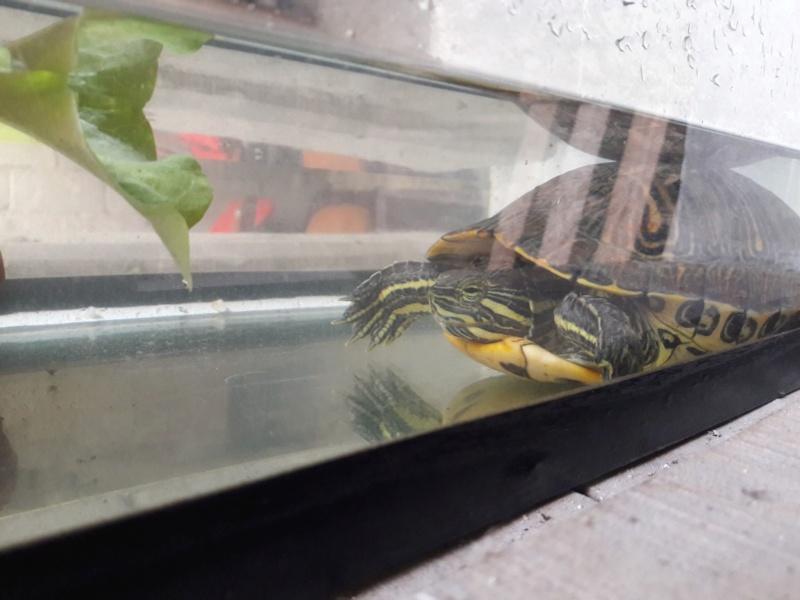 Trouvée tortue sur la route 36399610
