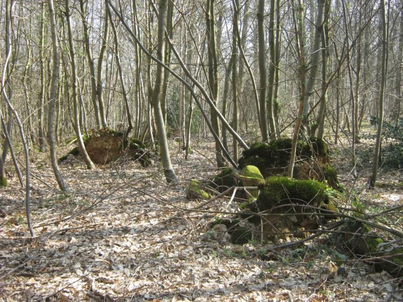 Forêt de Meudon  Img_6717