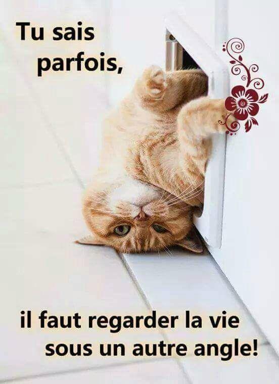 """""""L'admin"""" La_vie11"""