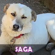 Association Remember Me France : sauver et adopter un chien roumain 19777610