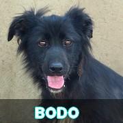 Association Remember Me France : sauver et adopter un chien roumain Bodo10