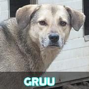 Association Remember Me France : sauver et adopter un chien roumain Gruu11