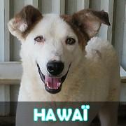 Association Remember Me France : sauver et adopter un chien roumain Hawai11