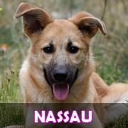 Association Remember Me France : sauver et adopter un chien roumain Nassau12