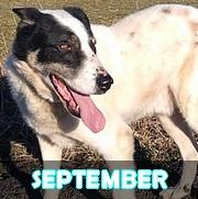 Association Remember Me France : sauver et adopter un chien roumain Septem10