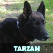 Association Remember Me France : sauver et adopter un chien roumain Tarzan11