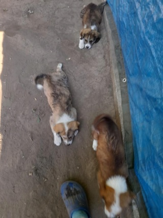 YUKI, née en  06/2021, trouvée avec sa mère LALI et ses 3 soeurs-R-SC 22932912