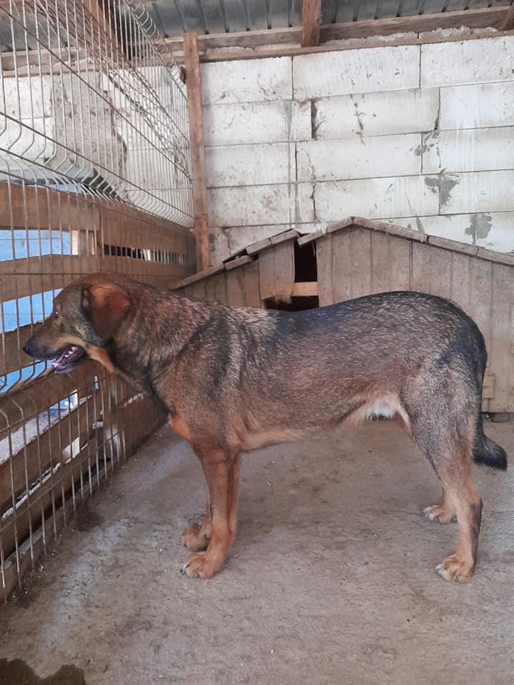 OUZO, né en sept 2017,  croisé berger, frère de Taliya et Nami, trouvé dans la rue en mai 2018 - Parrainé par Viviane -R- - Page 2 23932810