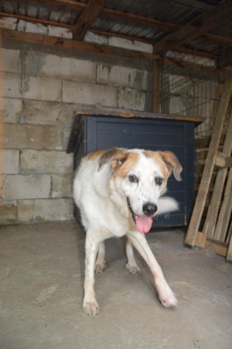 NEISSON, mâle taille moyenne, né en 2010 , trouvé près de Bucarest - parrainé par Sylvie H-R-SC-SOS - Page 2 Dsc_4117