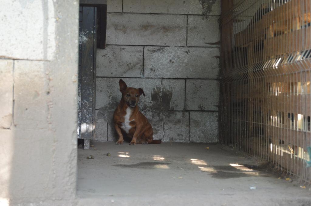 FOOTI, mâle, né en 2015 , sorti de Mihailesti le 13 juin-R-SC Dsc_4525