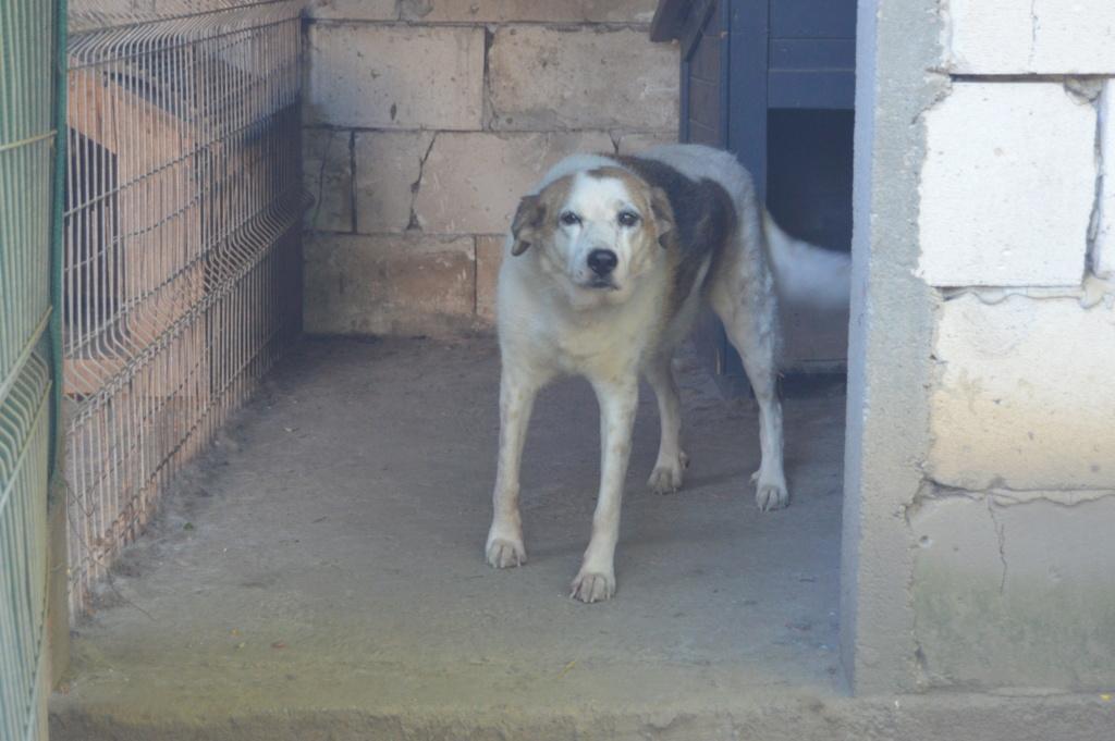 NEISSON, mâle taille moyenne, né en 2010 , trouvé près de Bucarest - parrainé par Sylvie H-R-SC-SOS - Page 2 Dsc_4721