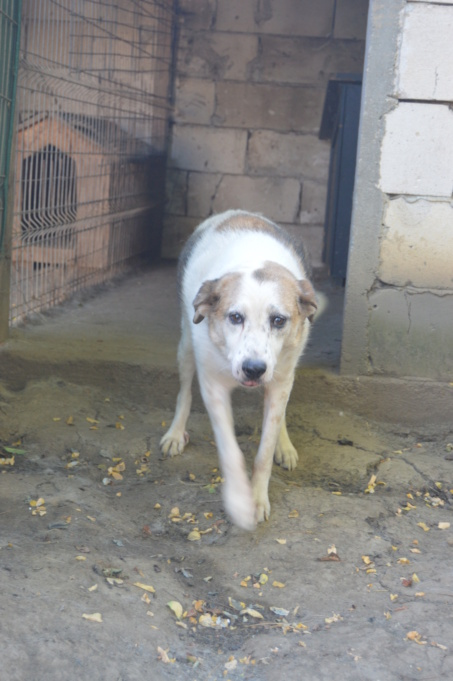 NEISSON, mâle taille moyenne, né en 2010 , trouvé près de Bucarest - parrainé par Sylvie H-R-SC-SOS - Page 2 Dsc_4725