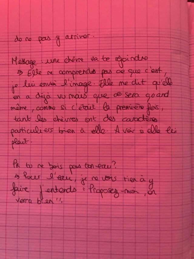 Mouchette, ânesse malade Ca_211