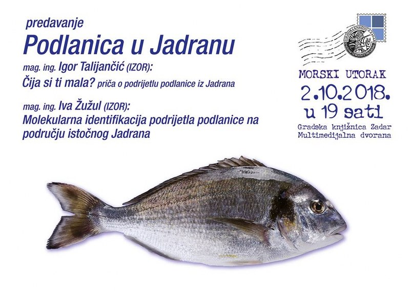 RIBA - MORSKA i SLATKOVODNA: vrste, zanimljivosti, pitanja, ribolov, recepti za pripremu... - Page 23 Orada_10