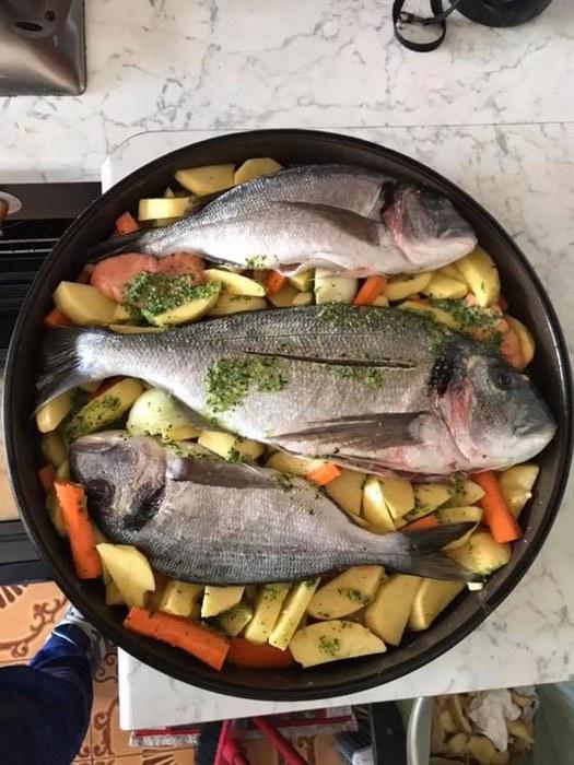 RIBA - MORSKA i SLATKOVODNA: vrste, zanimljivosti, pitanja, ribolov, recepti za pripremu... - Page 23 Orada_11