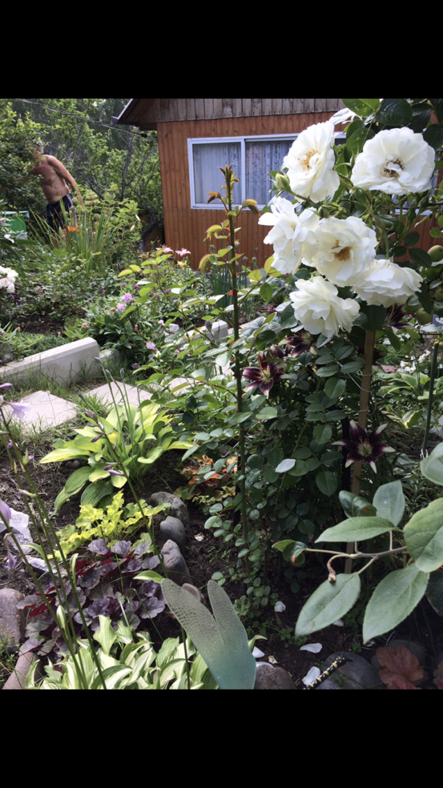 Розы цветут - Страница 24 F638f710