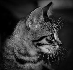 Informações Sobre o Jogo Kitten10