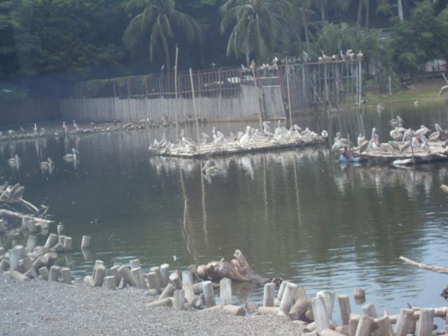 Фотки из Восточных путешествий - Страница 3 Sdc11824
