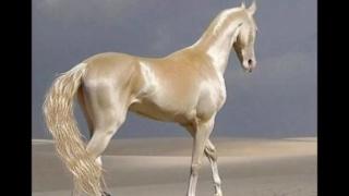 Конь изабелловой масти (2018) U13
