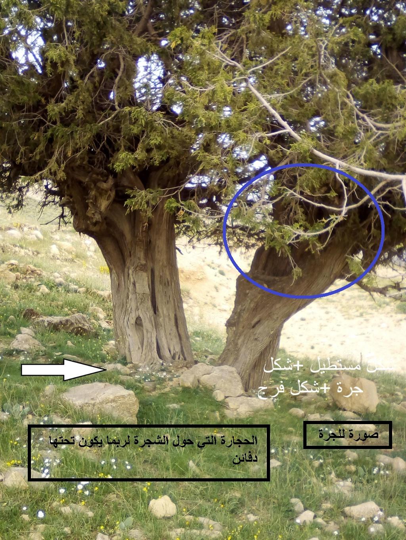 الاشجار التكنيزية Img_2110