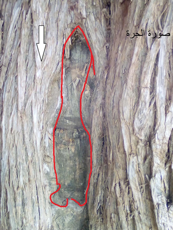 الاشجار التكنيزية - صفحة 2 Img_2114