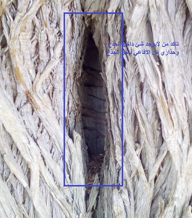 الاشجار التكنيزية Oooo11