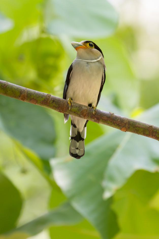 El pájaro - Octavio Paz Pajaro11