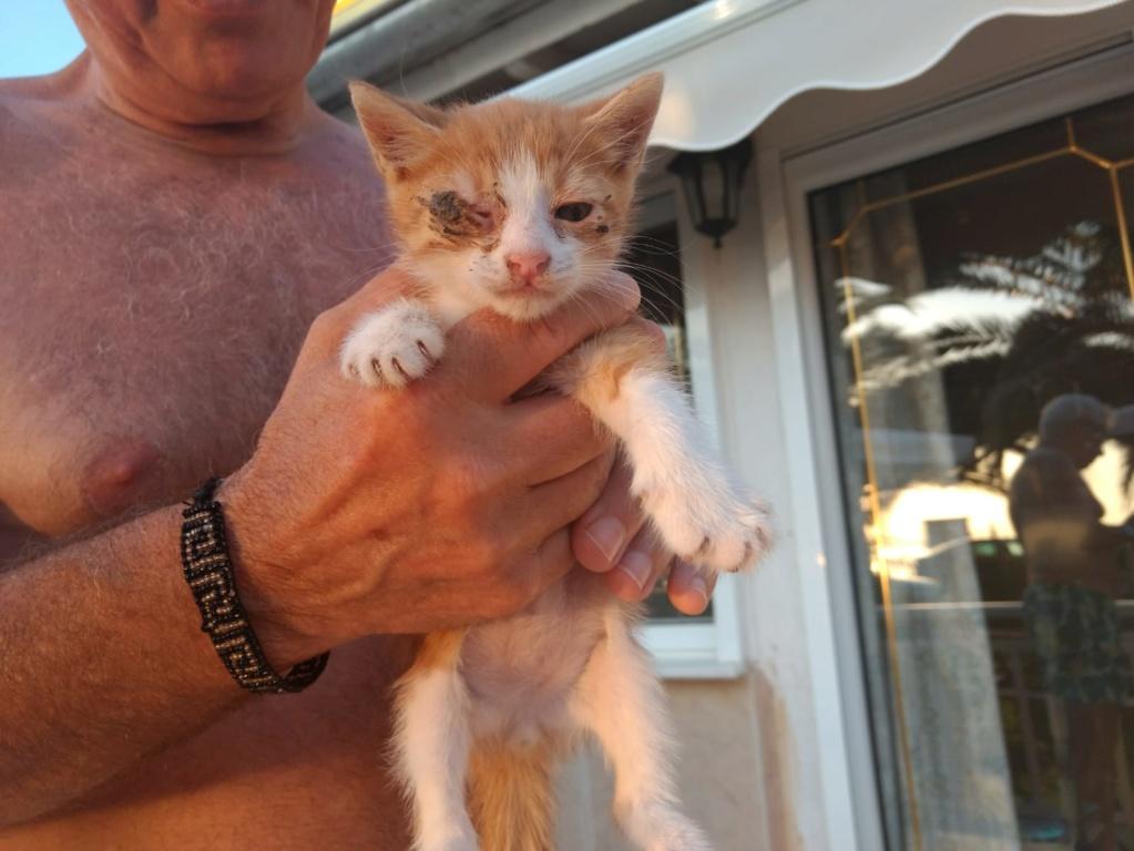 Αδέσποτα γατάκια  Img-2011