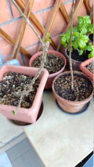 meli da seme immobili Img_2023